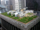 Can a green roof save you money?