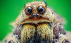 The Ultimate How Spiders Work Quiz