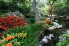 How to Build a Water Garden