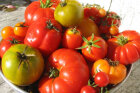 How to Choose the Perfect Tomato