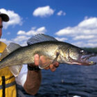 How to Hold a Walleye