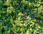 How to Plant Vines