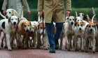 Top 5 Hunting Dog Breeds