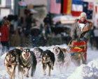 How the Iditarod Works