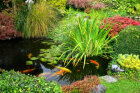 Tips to Install a Backyard Pond