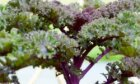 Kale: Natural Food