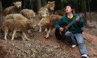 Can you live safely among wolves?