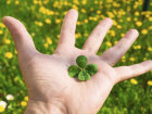 Why are four-leaf clovers lucky?