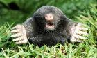 The Ultimate Mole Quiz