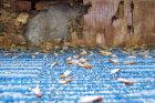 Preventing Termites
