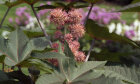 The Ultimate Poisonous Plants Quiz