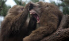 Primate Quiz