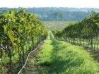 Queensland Wine Region
