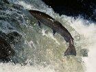 Top 4 Salmon Locations