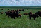 State Parks and Scenic Grasslands