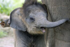 10 Surprising Things Animals Do With Their Babies