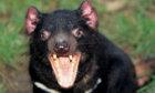 The Ultimate Tasmanian Devil Quiz