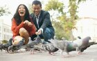 10 Myths About Pigeons