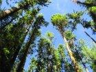 How tall do trees grow?