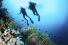 The Ultimate Underwater Tourist Attractions Quiz
