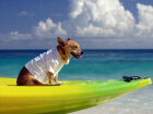 How to Vacation With Your Pet