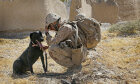 Sit, Stay, Think: Sniff Out the Answers in Our War Dog Quiz