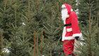 How Do Christmas Trees Get Their Shape?