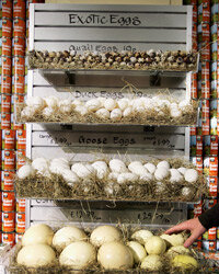 Some stores now sell exotic organic eggs.