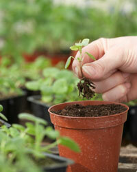 Seedlings aren't just for the yard anymore -- they can also be part of your roof.