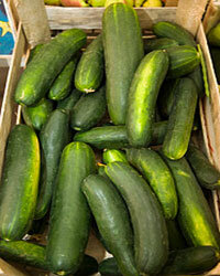 Cucumbers are a cinch to grow in your backyard.