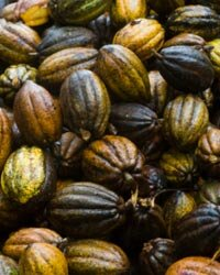 Cocoa beans usually end up producing chocolate, but some people have tried adding it topically in order to moisturize skin.