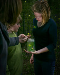 Fireflies are nature's flashlights!