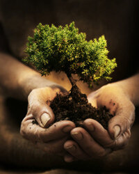 Buy the application A Real Tree and you'll help fight global warming one tree at a time.