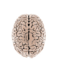 The brain is so complex that even the fastest supercomputer can't simulate it in real time.