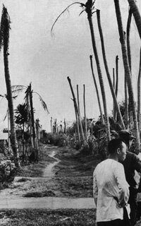 A path lined with bare palm trees in Ben Tre, South Vietnam, after the area was sprayed with Agent Orange during the Vietnam War.