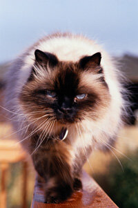 Cat Image Gallery Why does this kitty purr? See more pictures of cats.