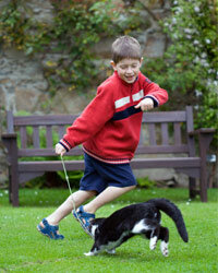 A wand toy -- a stick or rod with a soft or feathered lure on one end -- can get both your kid and your cat up and moving.
