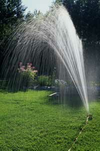 Up to half of household water usage comes from landscaping.