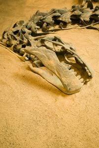 Were dinosaurs a success story, or were they doomed to extinction? See more dinosaur pictures.