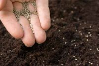 Direct seeding is often the beginning of many vegetable gardens. See more pictures of vegetables.