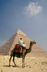 The camel replaced the wheel as the primary means of transportation for a long time in certain areas of the world.