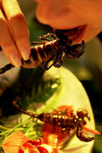 Ma'am, would you care for more scorpions?