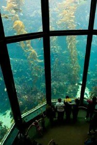 The Monterey Bay Aquarium is an                                  up-close look at Pacific marine life.