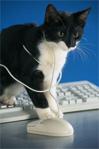 That's not Colby, the pseudo college-going cat, but still, that feline looks pretty smart. See more investing pictures.