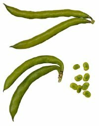 The immature pod is the part of the green bean plant that is eaten.