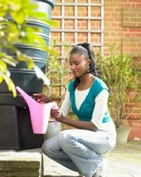 A rain barrel is an inexpensive way to get water for your plants.