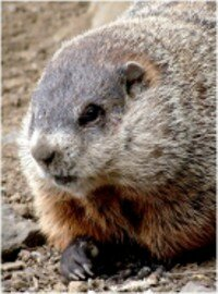 A shadow on Groundhog Day means six more weeks of winter!