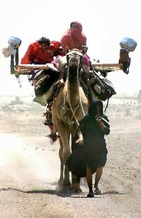 An Indian nomadic family undertakes their annual migration. India's 2003 heat wave spurred nomadic families to start their migration early.