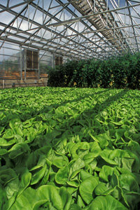 A hydroponics garden. See more pictures of vegetables.