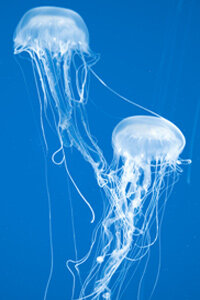 Marine Life Image Gallery Their bodies may be nearly invisible, but the scars they can cause are anything but.